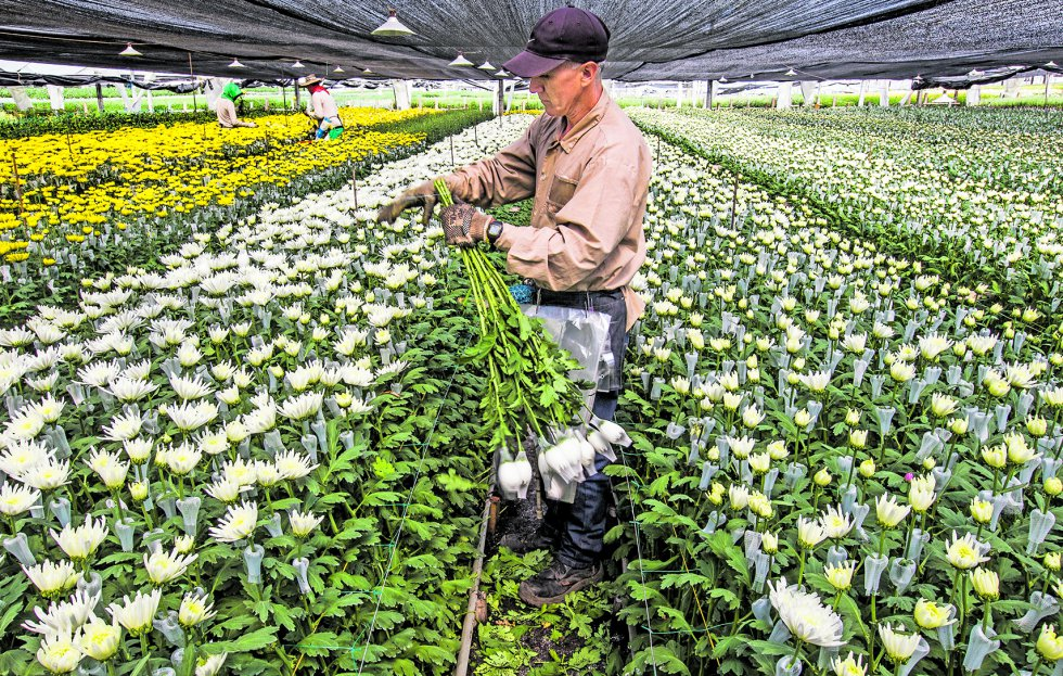 Agricultores de Flores