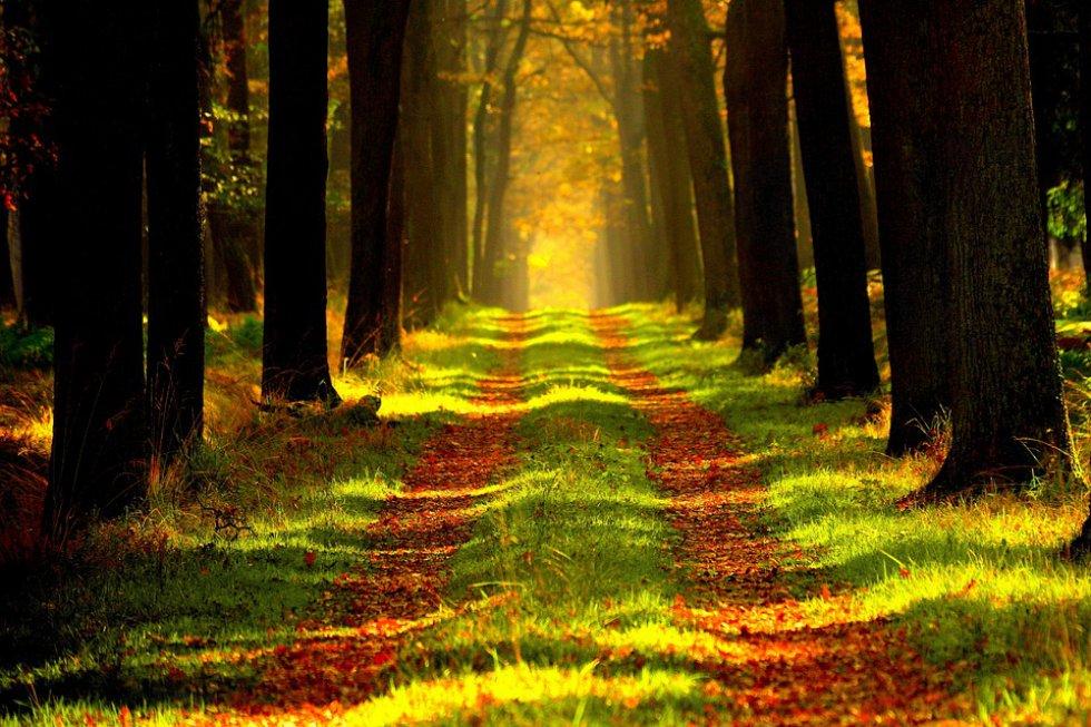 Hilofobia: temor a los árboles. Esta fobia quizá es el resultado de las películas de terror y sus inhóspitos paisajes.