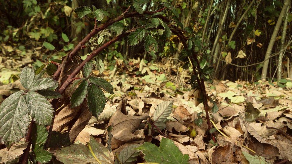 Las plantas no quisieron quedarse fuera de esta galería. Esta foto, que nos envió Bea Martis, la sacó en los alrededores de la Universidad Austral, donde estudia, en Valdivia, Chile.
