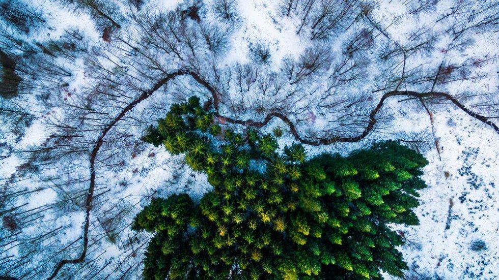 """La foto tomada por Michael Bernholdt de un bosque de pinos en Dinamarca ganó el primer premio en la categoría de Naturaleza y Vida Silvestre. """"Busco patrones y líneas creadas por la naturaleza, como el lago que rodea el bosque de pinos. Pero también busco patrones hechos por el hombre y líneas como carreteras con curvas y rastros de los equipos agrícolas""""."""