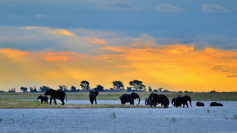 """Anna Sobotka eligió Botsuana como destino de su primer viaje a África. """"No estaba preparada para la dignidad y belleza natural de este país"""", asegura. Esta foto es del Parque Nacional de Chobe, donde tuvo la oportunidad de ver cómo se bañan los elefantes."""