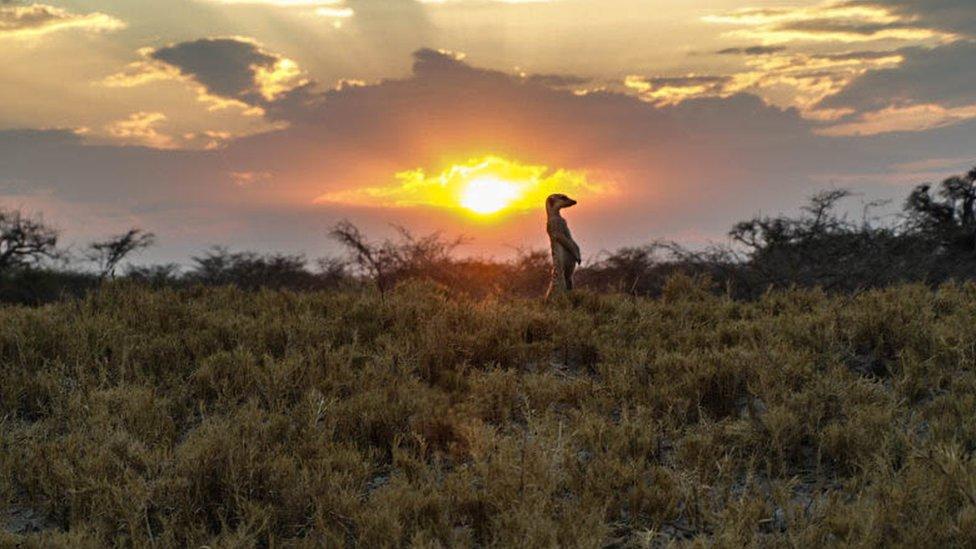 Y África sin suricatas no es África. Al menos esa fue la experiencia de Diane Kim quien retrató a esta en Makgadikgadi, uno de los salares más grandes del mundo.