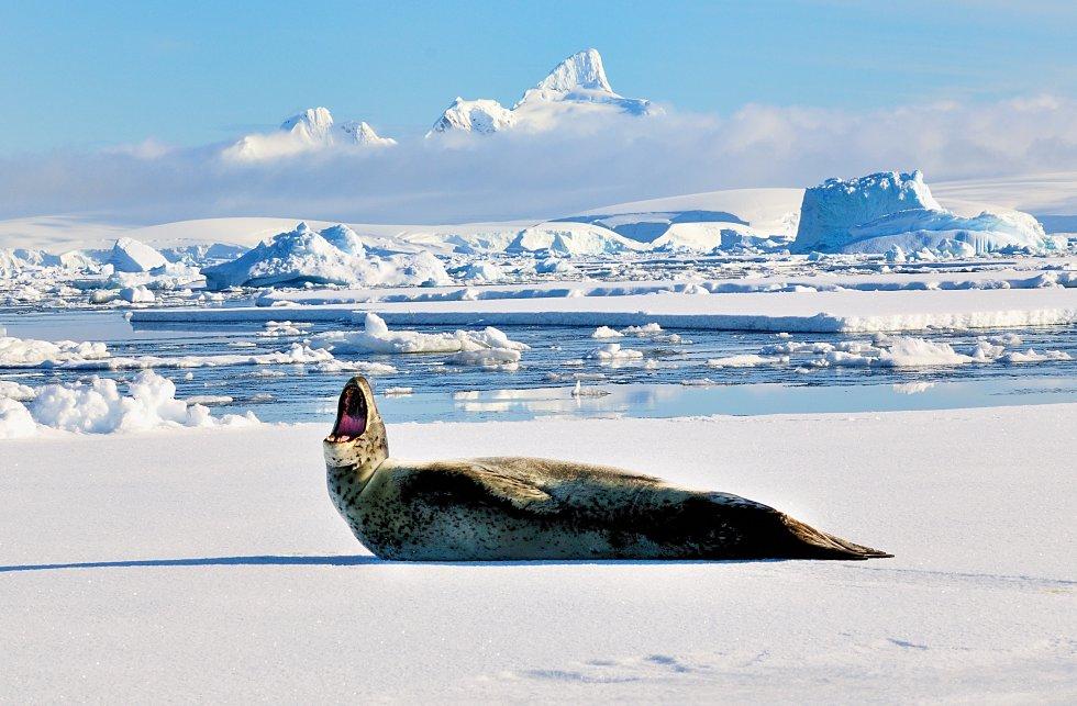 El Buque colombiano ARC 20 de Julio de la Armada Nacional se encuentra realizando una expedición científica en la Antártida.