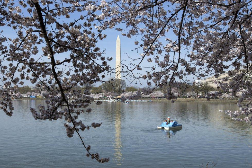 Este festival es el evento japonés más significativo que se celebra en Washington.