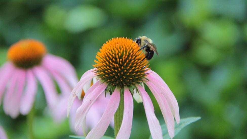 """Desde Argentina nos llega esta imagen """"de una flor a punto de ser acariciada por una lluvia artificial y la abeja enamorando a una flor"""", según nos cuenta su autora Patricia Hamnstrom."""