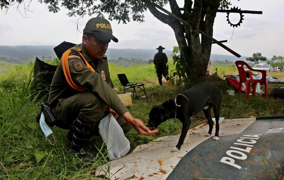 Una docena de policías que colabora con su mejor voluntad para acomodar a los animales.