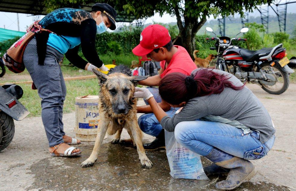 En el refugio hay perros, gatos, curiosos y sobrevivientes buscando a sus mascotas.