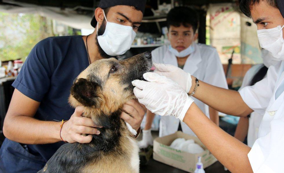 Fracturas y hematomas son las afectaciones más comunes de las mascotas en Mocoa.