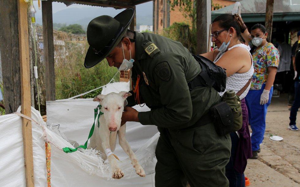 Cerca de 200 perros y gatos han pasado por el albergue desde el día de la tragedia.