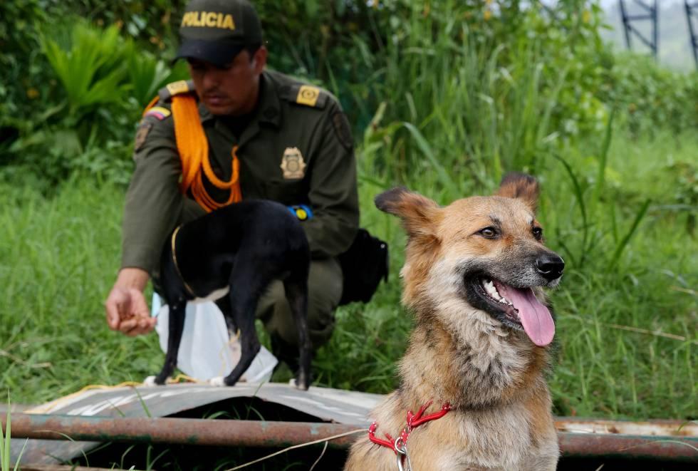 El albergue animal lo han improvisado los voluntarios tras la estación de Policía.