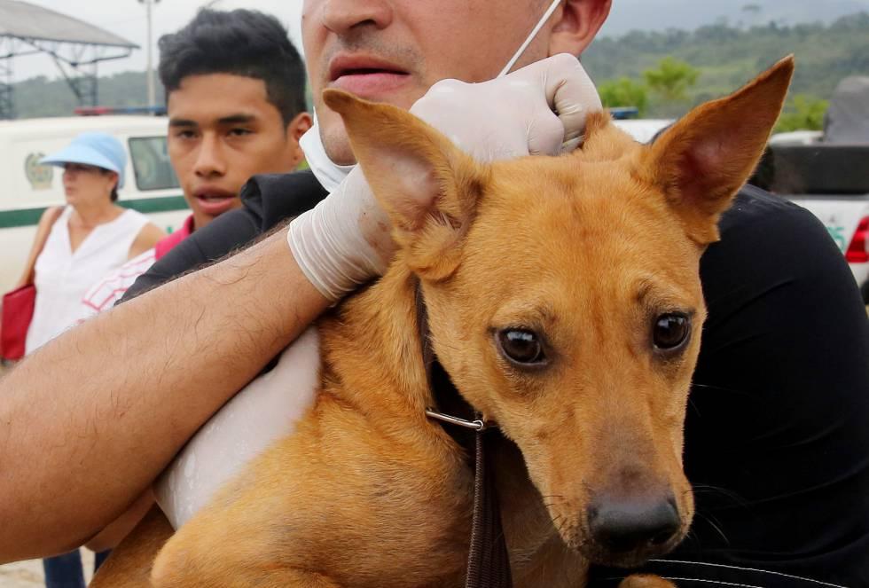 Aunque tienen refugio en el albergue, algunas mascotas se resisten a abandonar sus antiguas casas, seguramente con la esperanza de encontrar a sus familias.