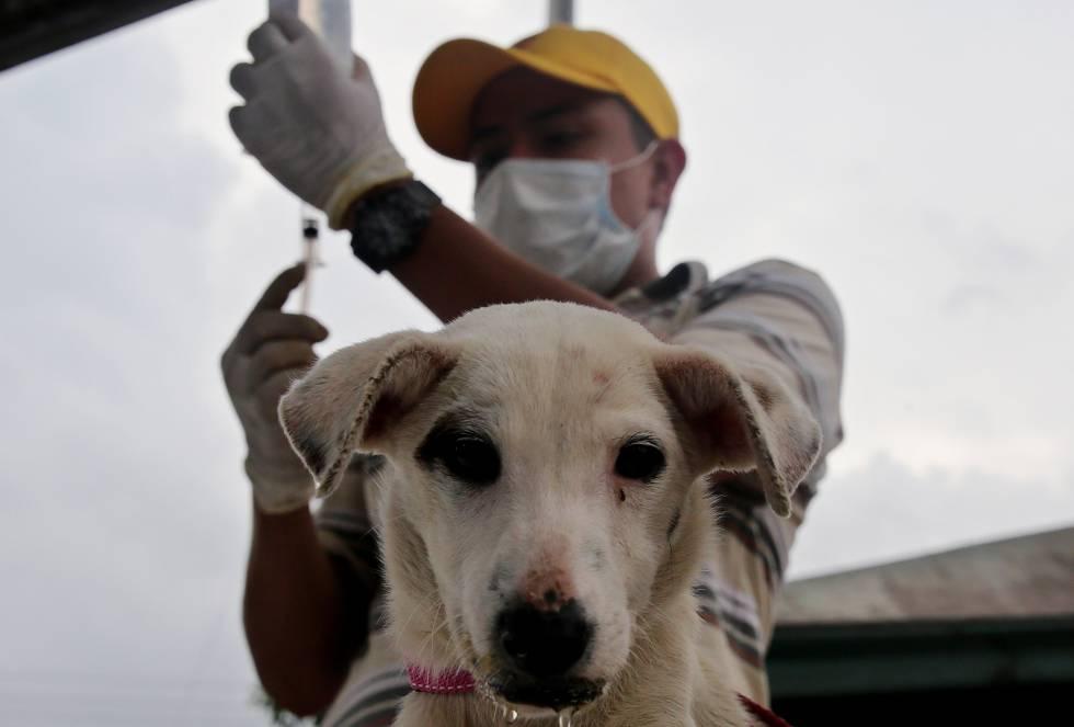 Vacunas, alimento y compañía son los beneficios que reciben las mascotas damnificadas por la avalancha.
