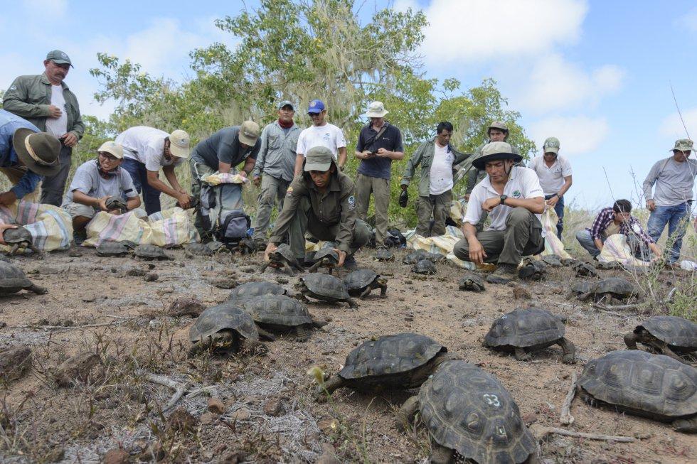 El archipiélago de Galápagos, situado a unos mil kilómetros de las costas continentales ecuatorianas, fueron catalogadas en 1978 como Patrimonio Natural de la Humanidad por la Unesco.