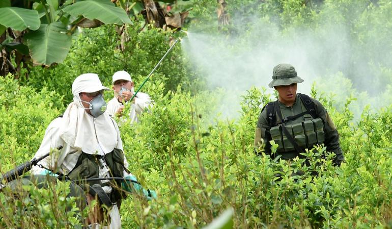 Colombia informa a EEUU sobre la erradicación de coca: Colombia ...