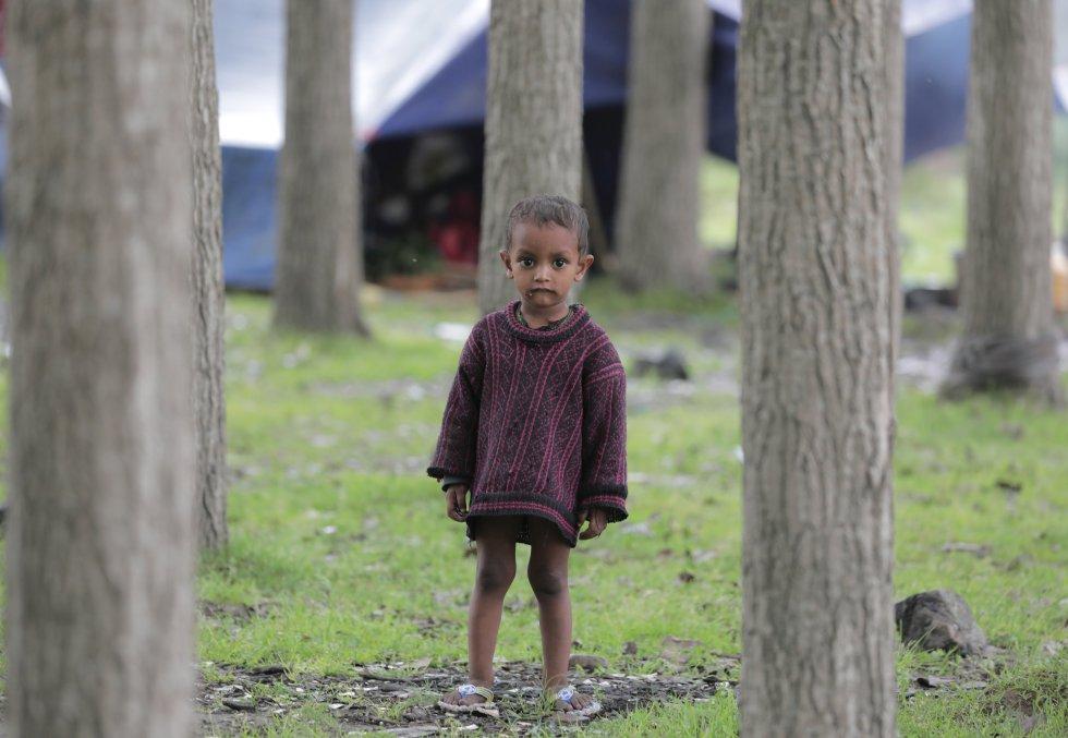 La comunidad nómada Bakerwal ha vuelto al valle de Cachemira para que su ganado pueda alimentarse durante el verano.