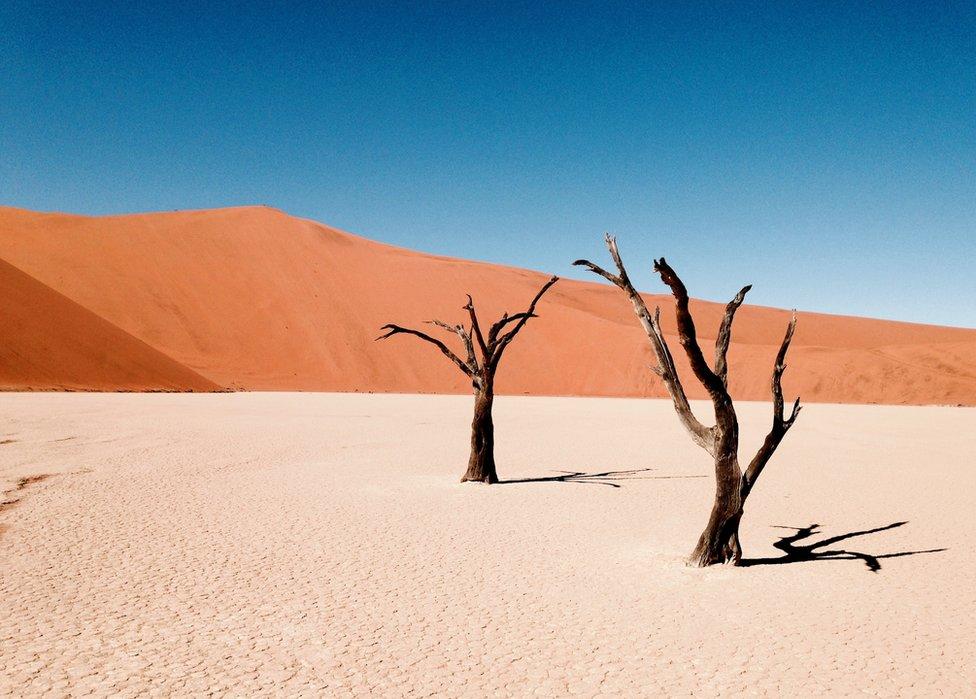 """Wolfgang Eckleben: """"Esta imagen es de una caminata en el desierto, en Sossusvlei, Namibia. Este lugar es un bello oasis cuando llueve, pero la mayor parte del año se ve de esta forma"""". Recuerda mandarnos tus paisajes a susimagenes@bbc.co.uk o etiquetándolas en Instagram con #SilvestreBBC. ¡Las esperamos!"""