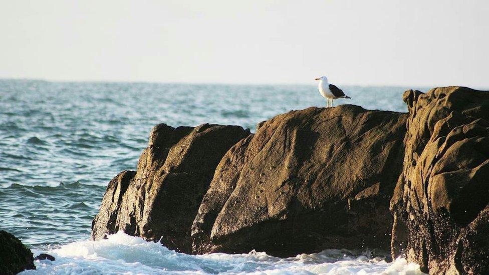 """""""Una solitaria gaviota viajera contempla un tranquilo atardecer en la costa de Con-Con, Viña del Mar, Chile"""", nos dice Víctor Parraguez quien nos hizo llegar esta imagen via email para el desafío de BBC Mundo #CostasBBC."""