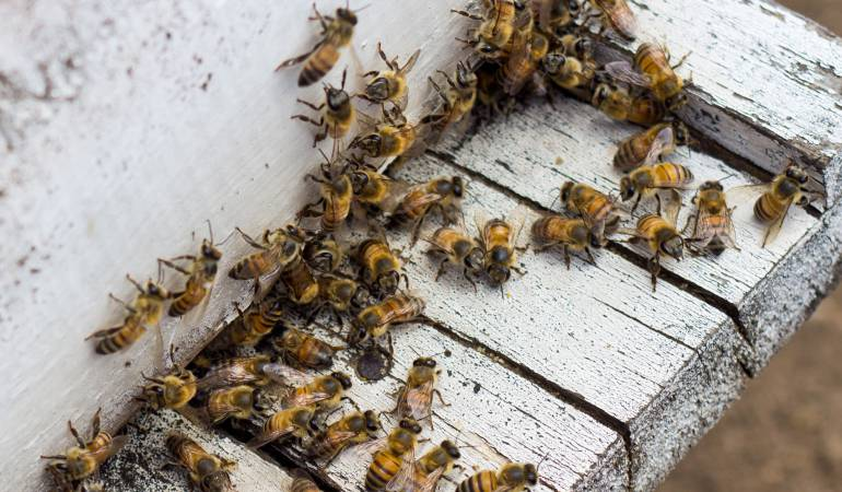 Resultado de imagen para abejas 2018