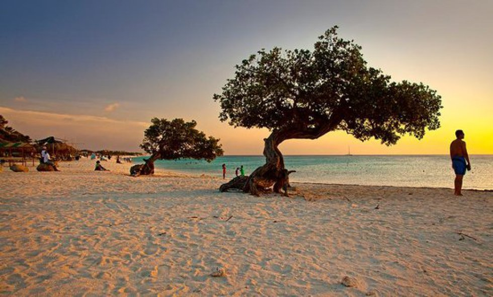 Eagle Beach Palm/Eagle Beach, Aruba