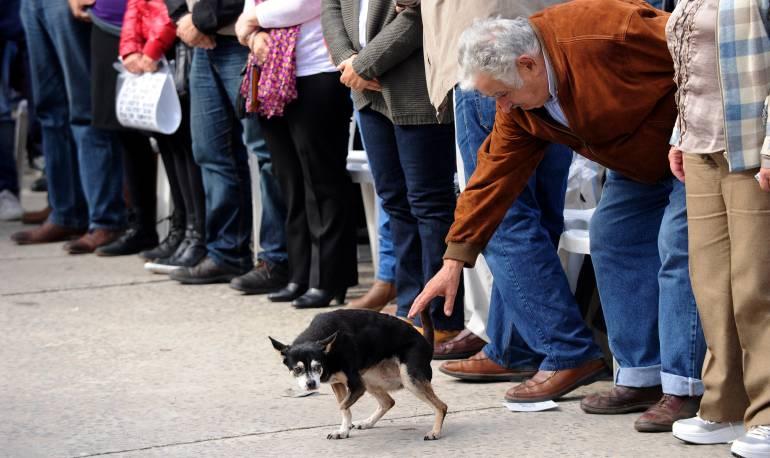 Pepe Mujica: Fallece Manuela, la inseparable mascota de José Mujica    Tendencias   Caracol Radio