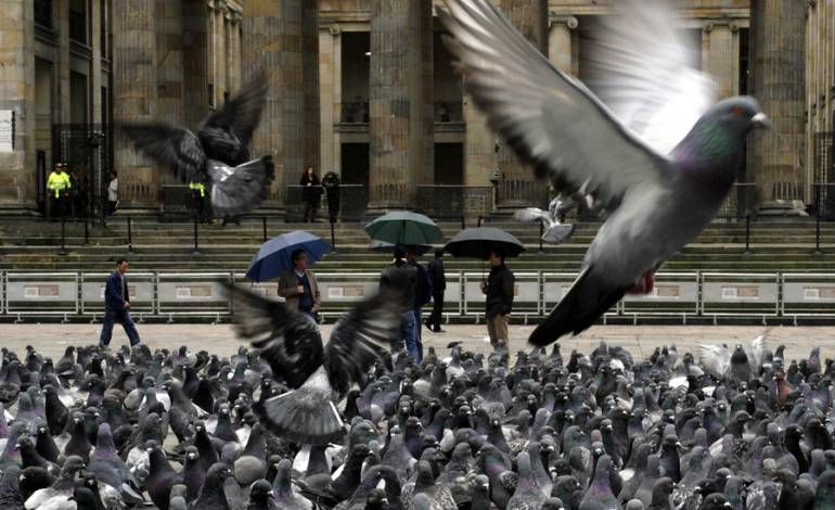 que+enfermedad+puede+transmitir+las+palomas