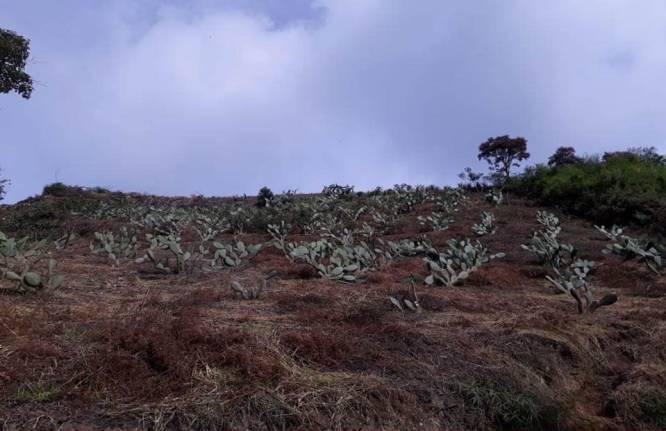 En Matanza, Santander, se realiza junto a la comunidad campañas para mostrar el impacto que las quemas agrícolas generan en el medio ambiente.