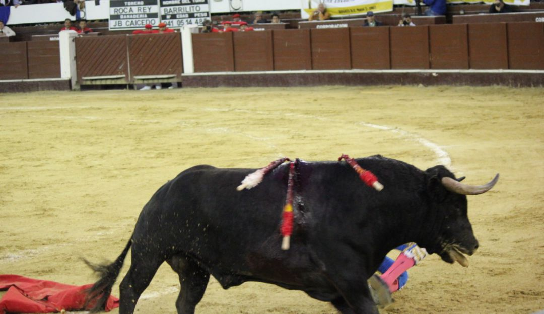 Toreros: Corte ratifica que corridas de toros no son maltrato animal
