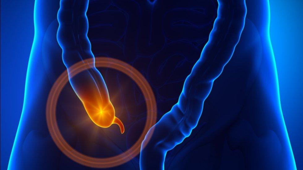 Apéndice: Investigaciones apuntan a que ayudaba en la digestión de las plantas. Pero, al aumentar la variedad de alimentos en la dieta quedó sin función. Aunque otros estudios afirman que ahora es un almacén de las bacterias del intestino.