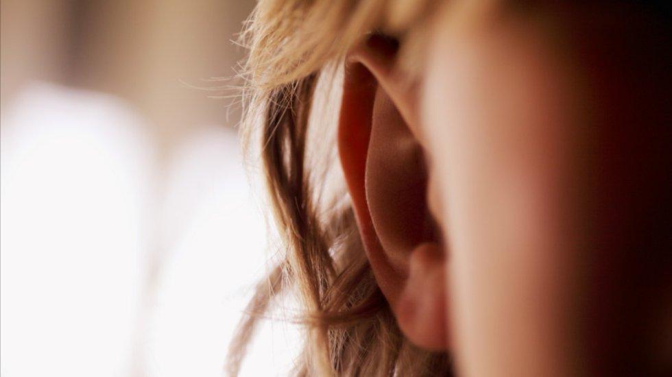 Músculos en las orejas: Son los responsables de mover las partes visibles de las orejas. Éstos son usados por otras especies para detectar presas o depredadores.
