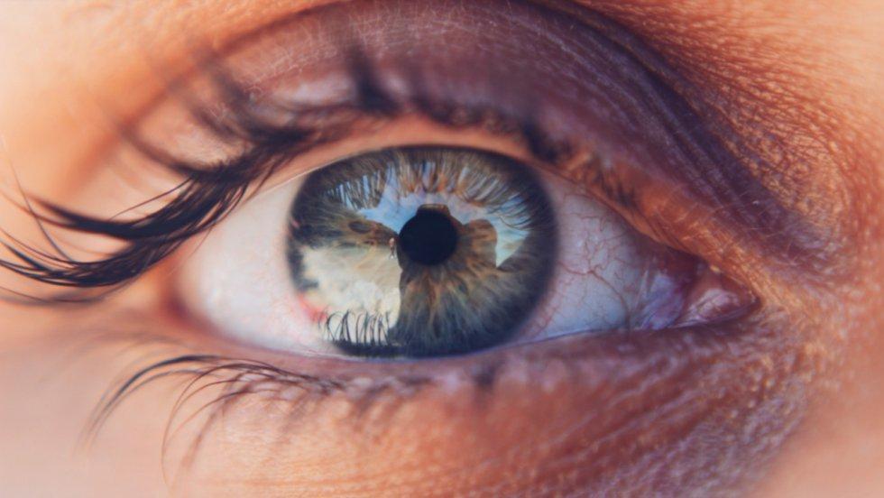 Tercer párpado: Es un pliegue situado en la esquina interna del ojo y sirve para proteger la vista, ayudan a que los ojos estén húmedos y libres de residuos.