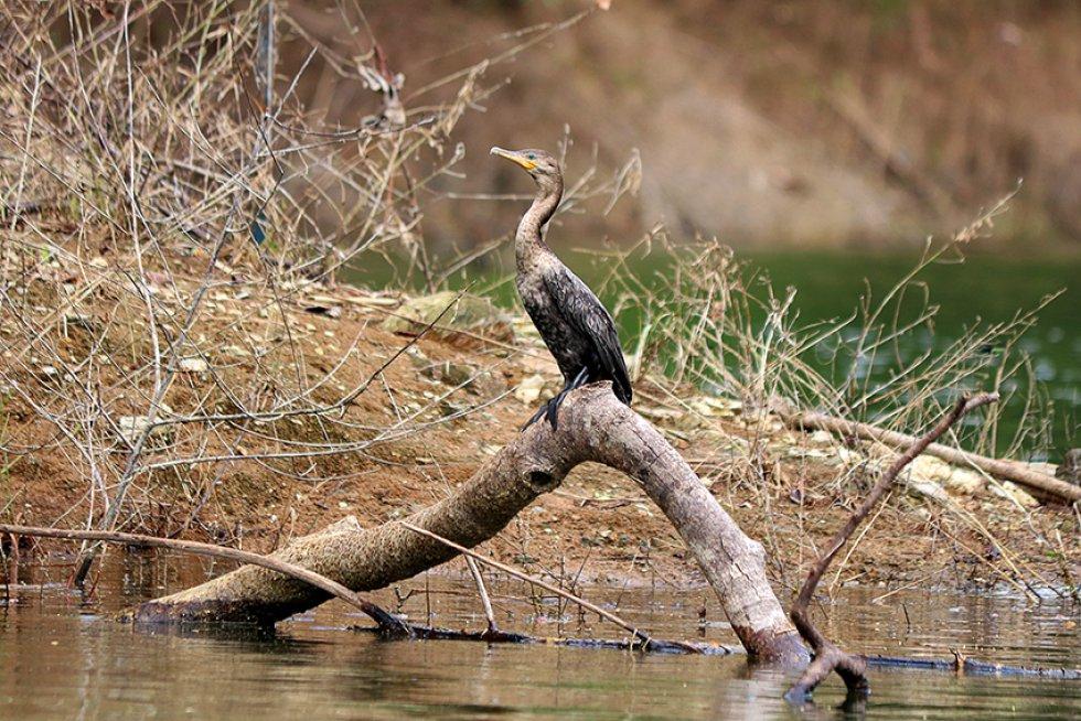 Embalse de Amaní, referente del turismo en Caldas: [En Fotos] Embalse de Amaní: riqueza natural
