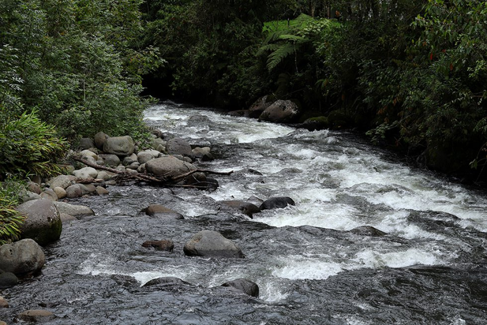 Risaralda le apuesta a su reconocimiento nacional con nuevo proyecto: [En fotos] Risaralda cuenta con proyecto que busca impulsar el ecoturismo