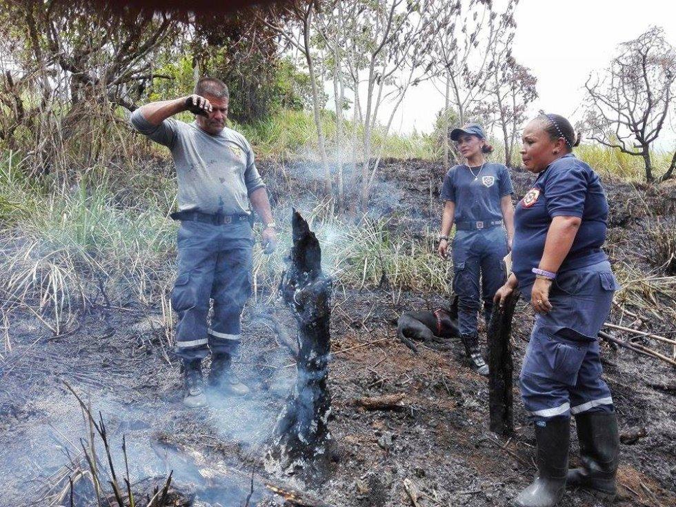 En Freno, Tolima, están comprometidos con el cuidado del medio ambiente: En Freno, Tolima, están comprometidos con el cuidado del medio ambiente