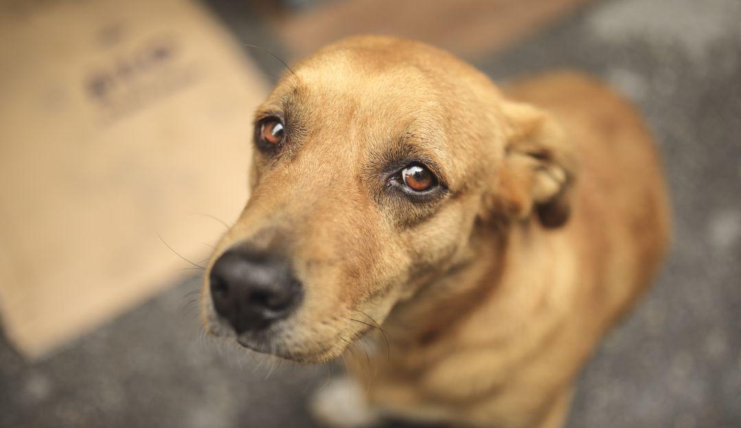 Maltrato animal: Imputan cargos a soldados que lanzaron al vacío a un perrito