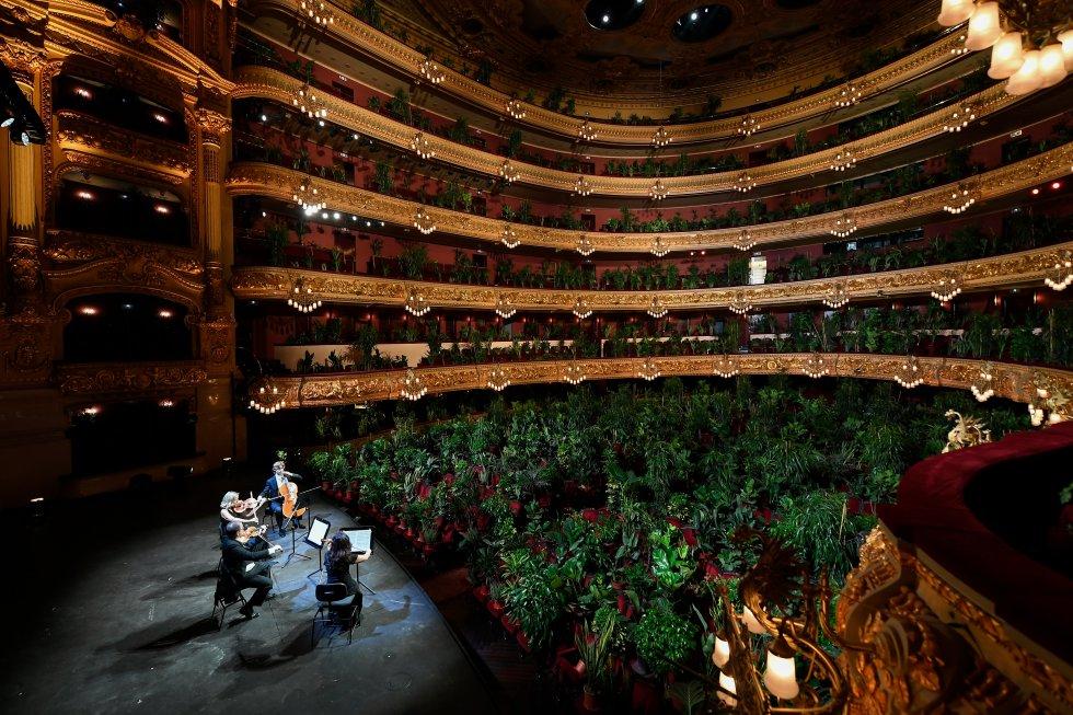El cuarteto Uceli toca para varias plantas, en España.