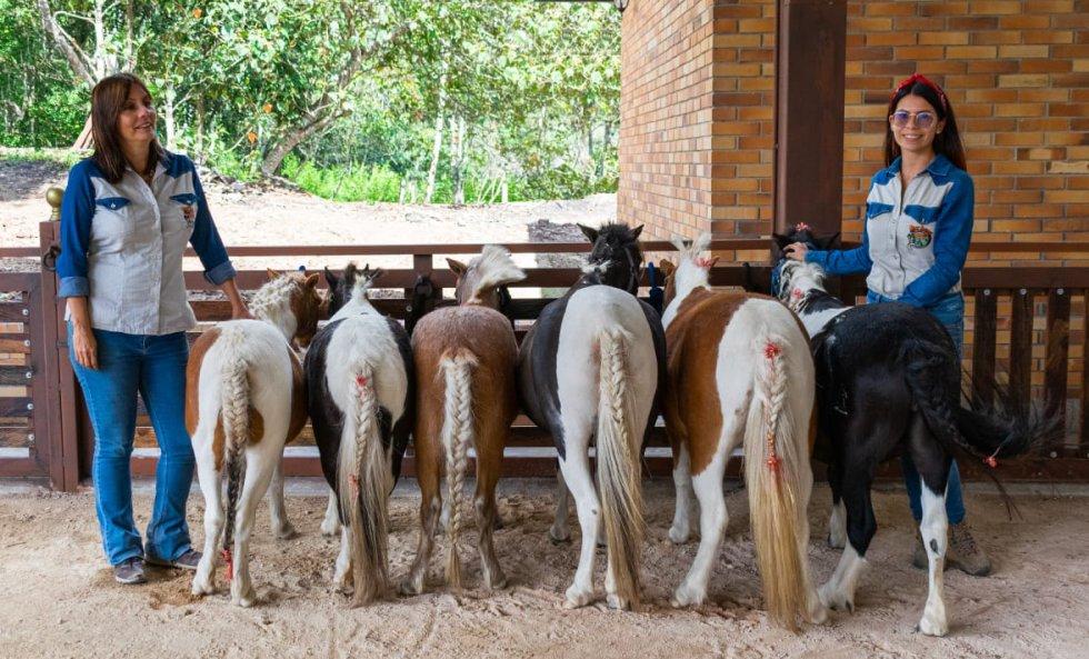 10 consejos para comprar un poni.: 10 consejos para comprar un poni.