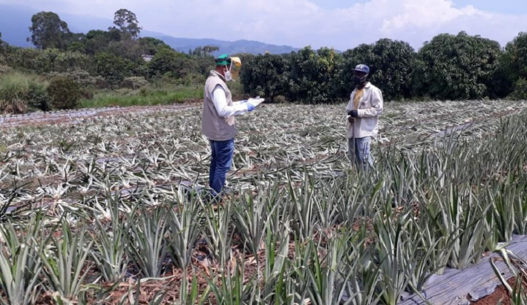 Colombia necesita nuevo modelo para fortalecer la producción agrícola