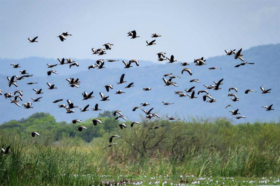 En el marco del Día Mundial de la Tierra, entra en vigor el Acuerdo de Escazú en América Latina, un ambicioso tratado para salvaguardar el medio ambiente, en una región destacada por su biodiversidad pero con infames problemáticas como la deforestación de la selva amazónica.Parque Nacional Palo Verde,  San José - Costa Rica