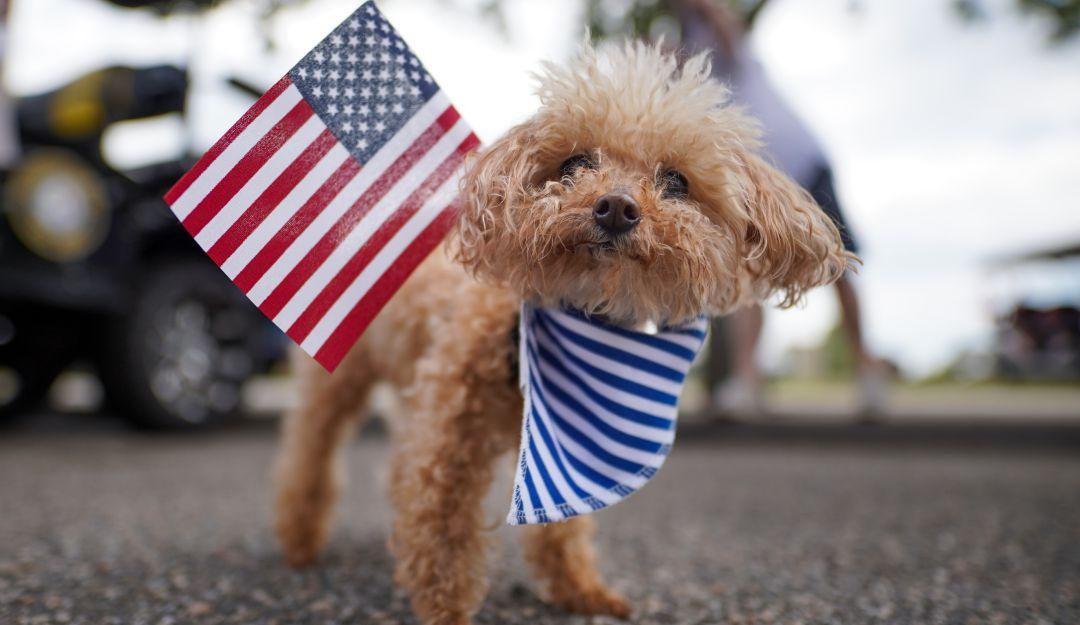 Mascotas y perros viajeros a Estados Unidos