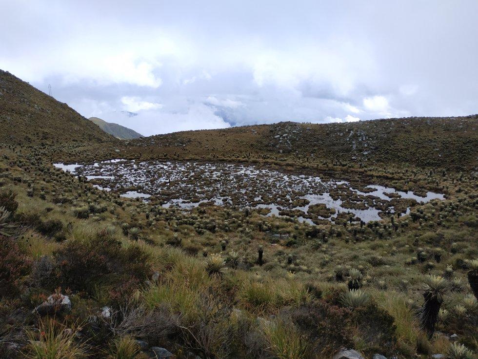 Los humedales o turberas son fundamentales para el funcionamiento del páramo. Además de brindarles refugio a varias especies de animales y plantas, son grandes esponjas que captan y almacenan el agua que nutre a los ríos