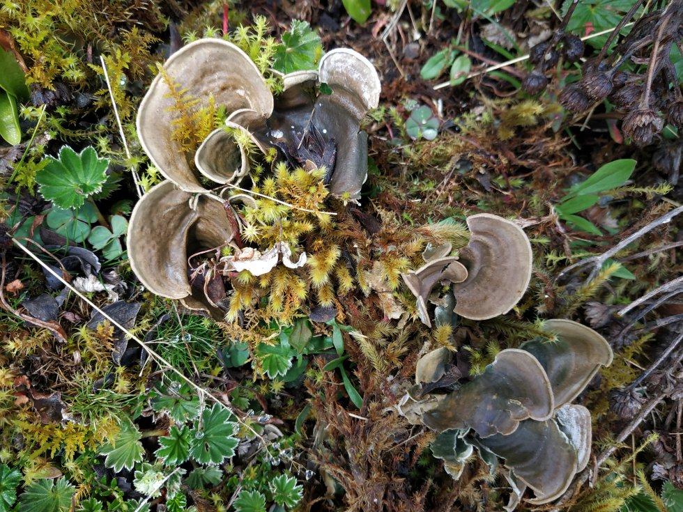 Los hongos también son protagonistas en el páramo del Almorzadero. Están tanto en la vegetación paramuna como sobre las rocas milenarias.