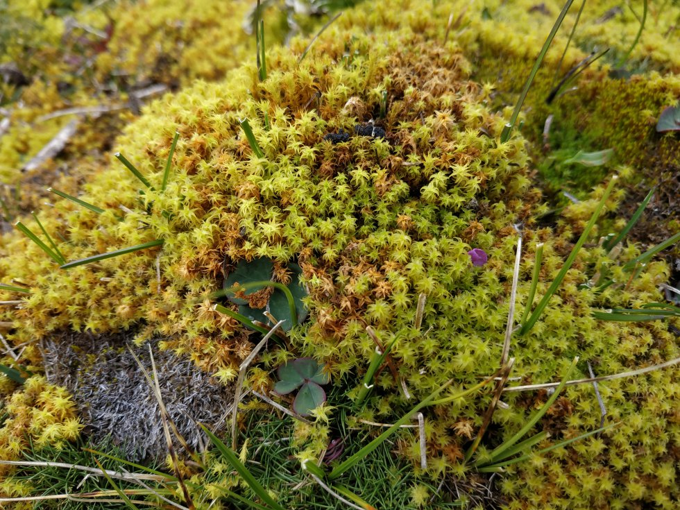 Los colchones de musgos y otras plantas de páramo se encargan de retener grandes cantidades de agua. En Almorzadero, gran parte de esta vegetación ha sobrevivido a los estragos del hombre.