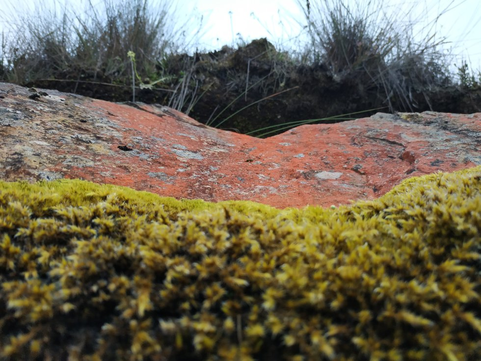 Capas del suelo en el páramo del Almorzadero: musgos, rocas rojizas y herbazales