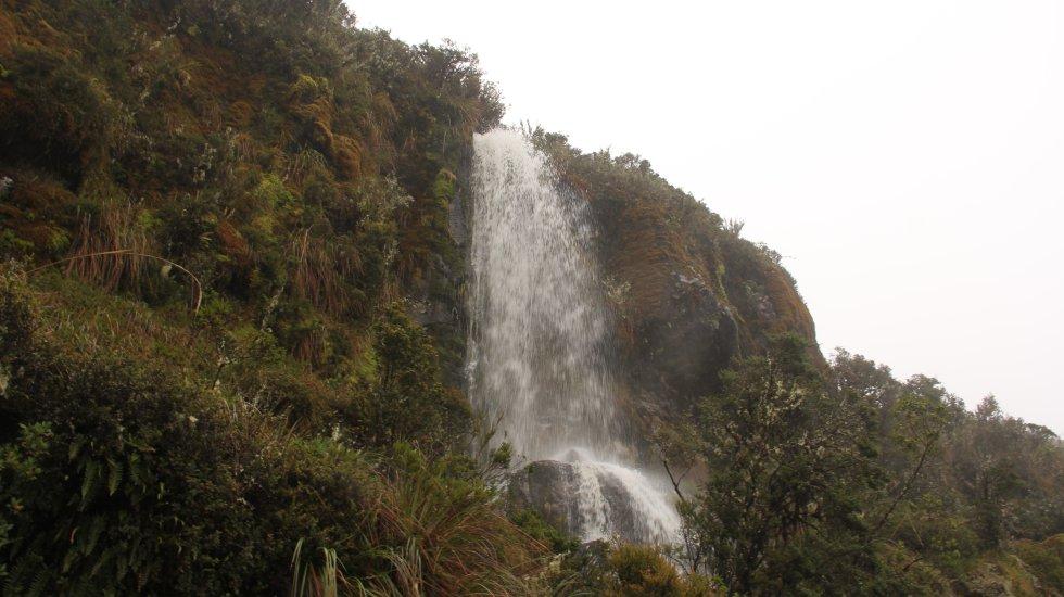 En Chingaza llueve durante ocho meses del año, con picos extremos entre junio y julio. Toda esta agua queda almacenada en las plantas paramunas que, luego nutre quebradas, humedales y ríos como Guatiquía y Chuza
