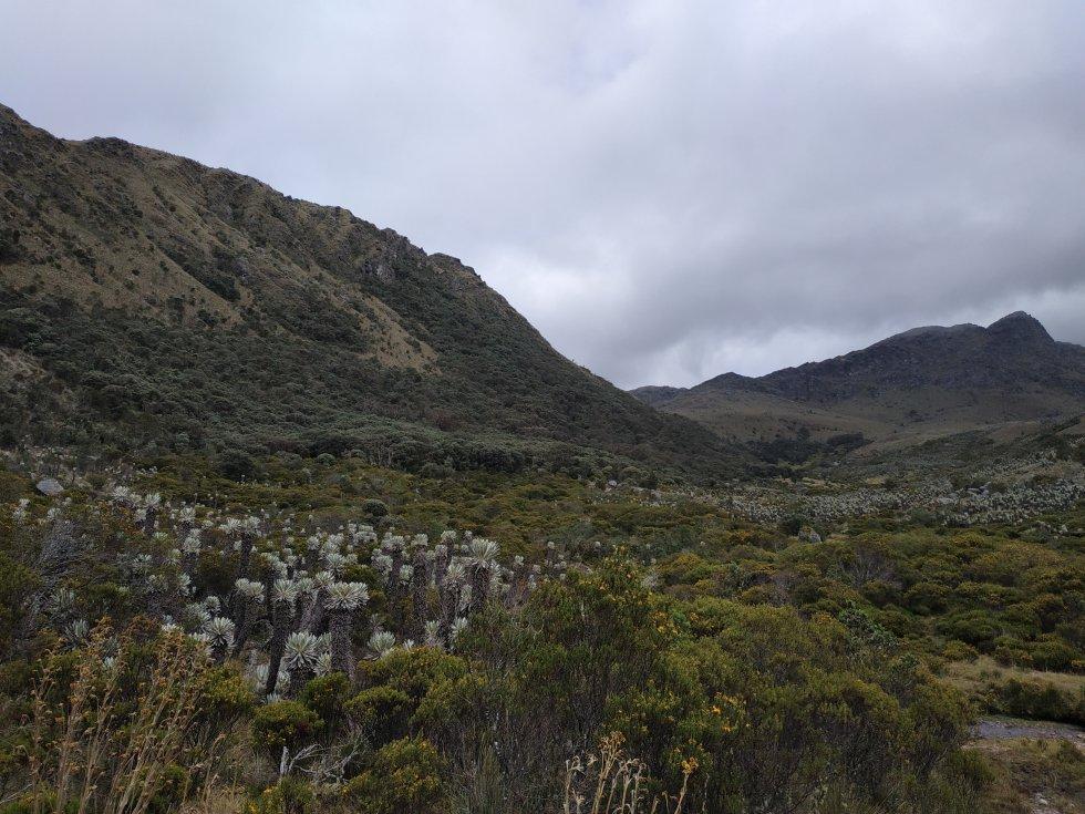 En las más de 2,9 millones de hectáreas paramunas de Colombia hay más de 4.000 especies de plantas, muchas de ellas únicas en el mundo