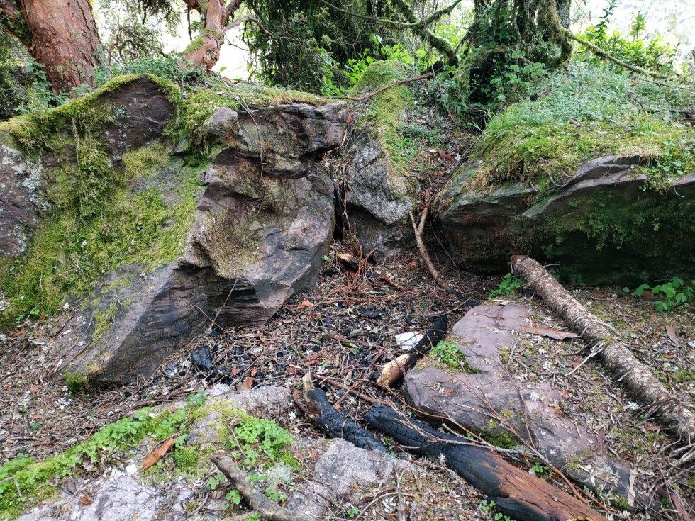 Las fogatas y basuras por parte de algunos campesinos están afectando al mayor parche de bosque de colorados del país.