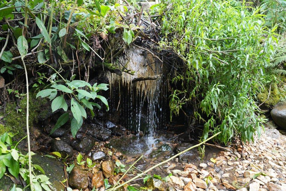 Los cultivos de cebolla y papa de los campesinos de Santurbán dependen del agua que nace en el páramo.