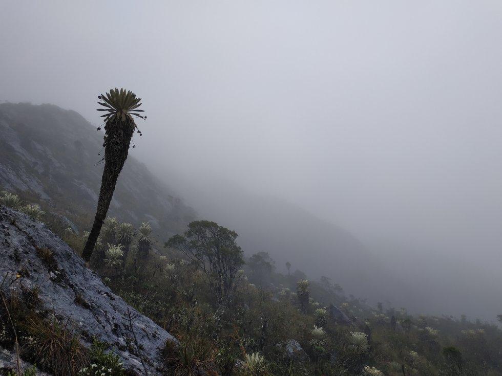 La Universidad de Pamplona tiene registros de aproximadamente 450 especies de plantas en Santurbán, páramo que está conectado con otros dos titanes hídricos: Almorzadero y Cocuy.