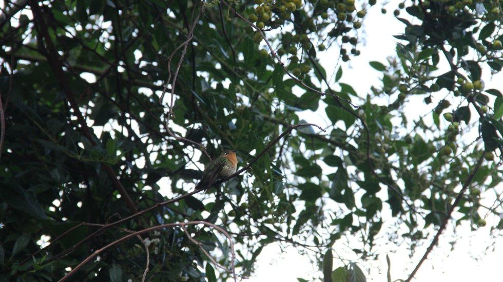 Santurbán le brinda hogar y refugio a cerca de 250 especies de aves y 53 de mamíferos, tanto terrestres como voladores.