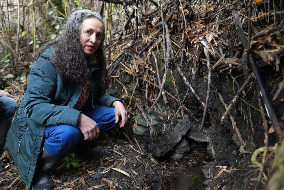 Marina Pabón, una mujer de 55 años nacida en el municipio de Mutiscua, tiene un tesoro en su finca: un nacimiento de agua que nutre al gran río Zulia y el cual cuida como si fuera uno de sus hijos. Lleva décadas sembrando árboles nativos y ahora tiene un cultivo de arándanos orgánicos.